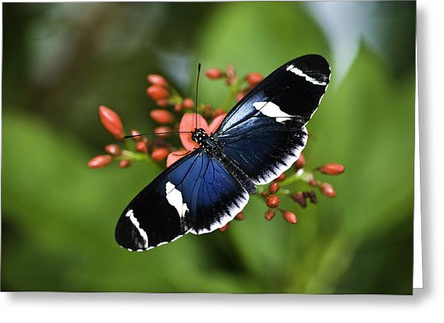 Butterfly 0002 Greeting Card