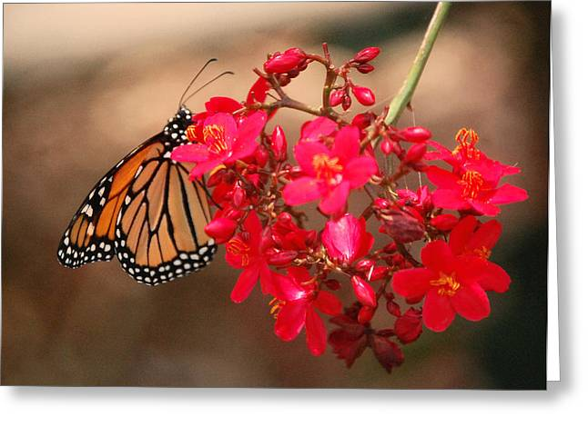 Greeting Card featuring the photograph Butterfly 1 by Leticia Latocki