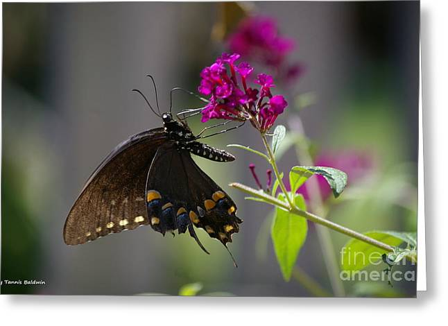 Greeting Card featuring the photograph Butterfly 1 by Tannis  Baldwin