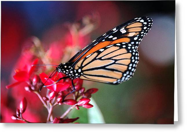 Greeting Card featuring the photograph Butterfly 2 by Leticia Latocki
