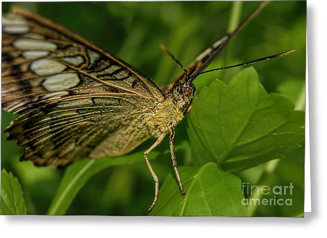 Greeting Card featuring the photograph Butterfly 2 by Olga Hamilton