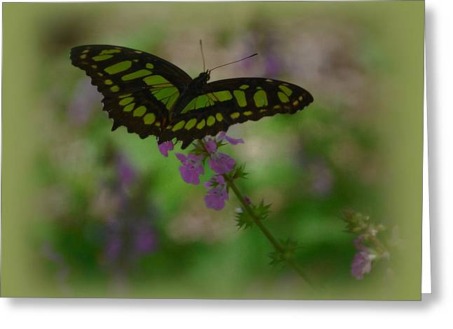 Greeting Card featuring the photograph Butterfly 4 by Leticia Latocki
