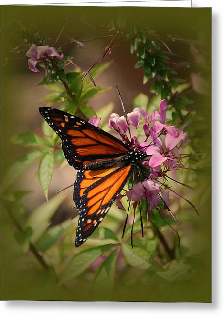 Greeting Card featuring the photograph Butterfly 5 by Leticia Latocki