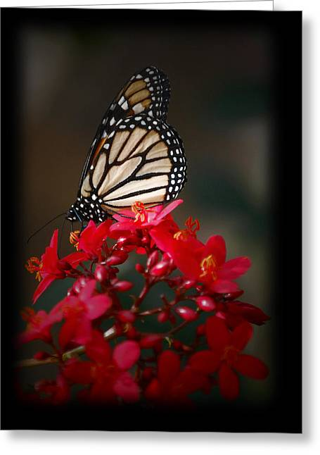 Greeting Card featuring the photograph Butterfly 6 by Leticia Latocki