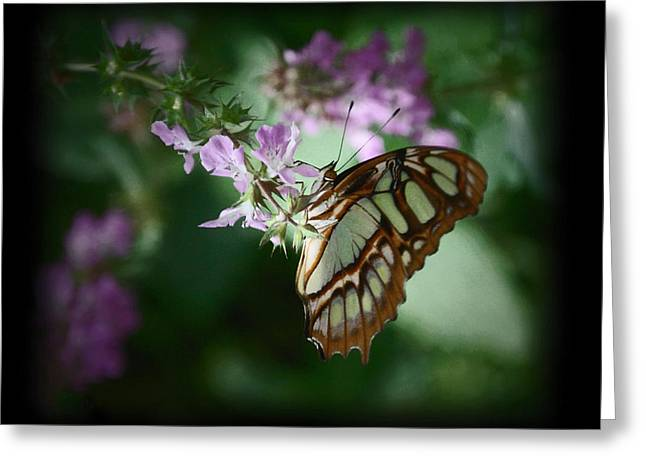 Greeting Card featuring the photograph Butterfly 7 by Leticia Latocki