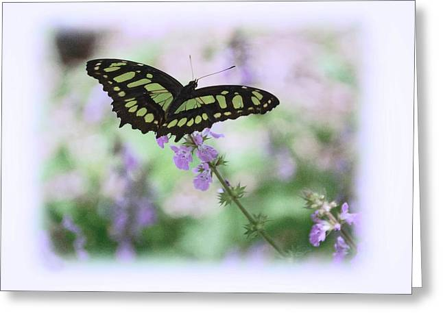 Greeting Card featuring the photograph Butterfly 8 by Leticia Latocki