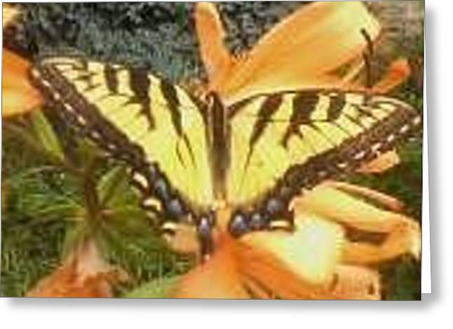 Butterfly Greeting Card by Amanda Moore