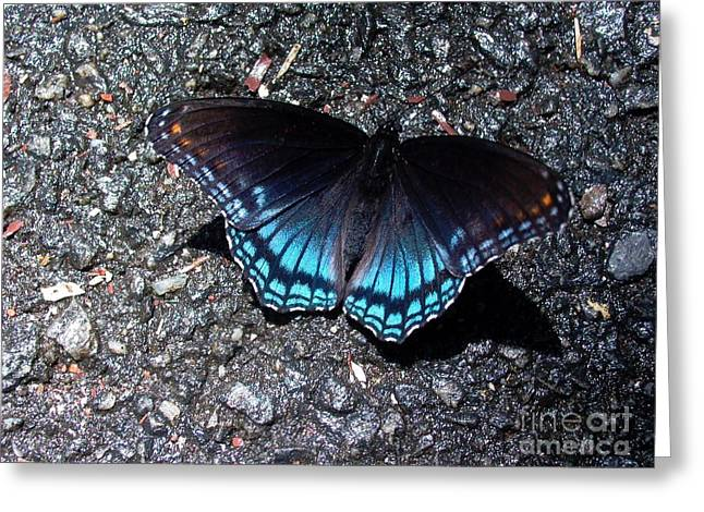 Butterfly And Asphalt Greeting Card