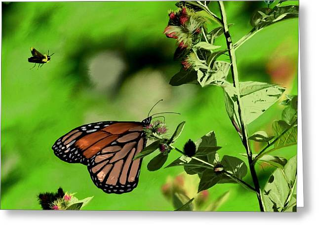 Butterfly And Bee Greeting Card