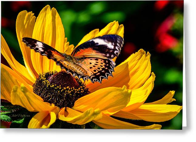 Butterfly And Bloom Greeting Card by Julie Palencia