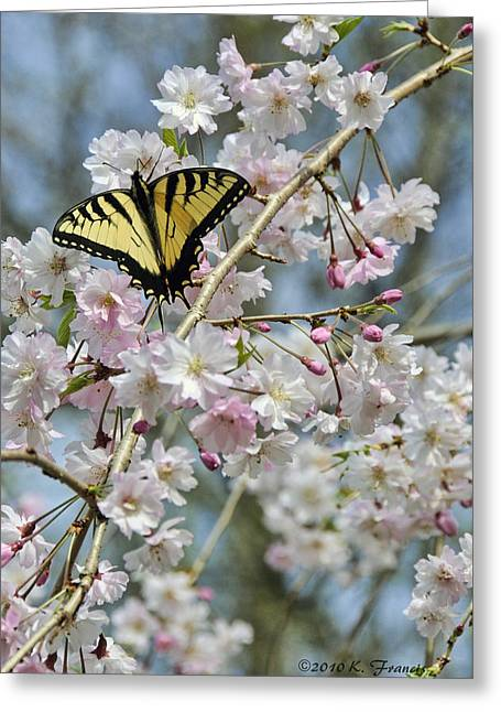 Butterfly And Blooms Greeting Card by Kenny Francis