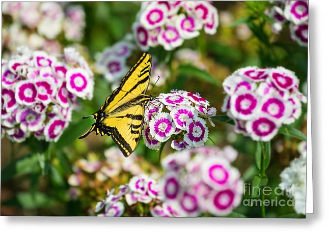 Butterfly And Blooms - Spring Flowers And Tiger Swallowtail Butterfly. Greeting Card by Jamie Pham