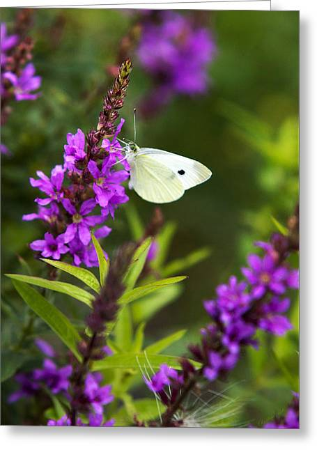 Butterfly And Bouquet Greeting Card by Christina Rollo
