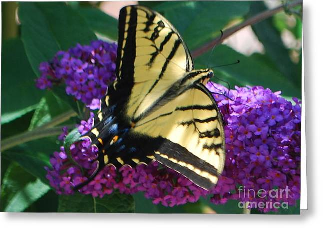 Greeting Card featuring the photograph Butterfly And Bush by William Wyckoff