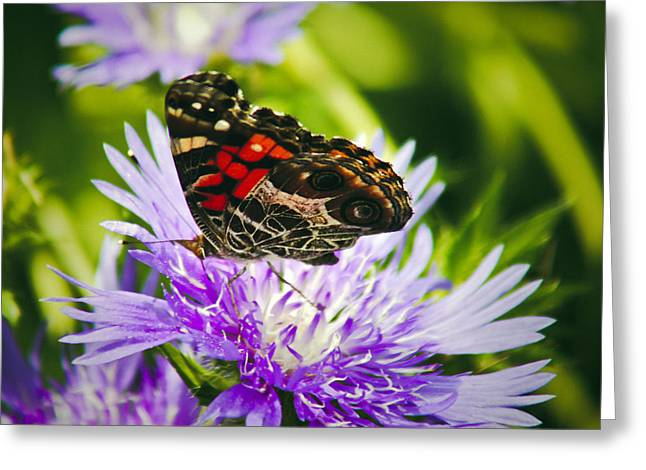 Butterfly And Flower Greeting Card
