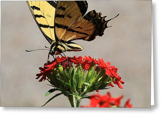 Butterfly And Maltese Cross 1 Greeting Card by Aaron Aldrich