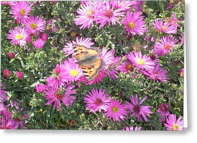 Butterfly And Pink Flowers Greeting Card