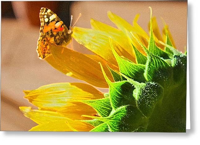 Butterfly And Sunflower Meeting Greeting Card