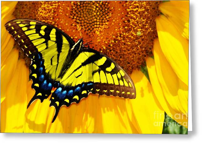 Butterfly And The Sunflower Greeting Card