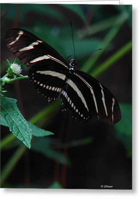 Butterfly Art 2 Greeting Card by Greg Patzer