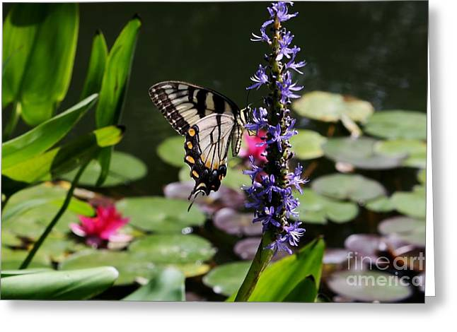 Butterfly At Lunch Greeting Card