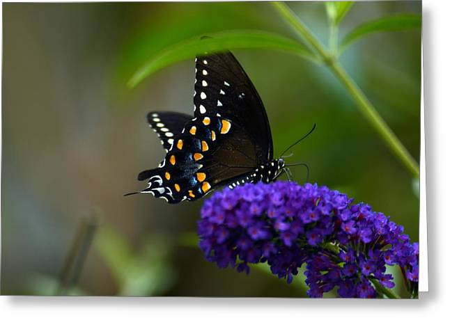 Butterfly Atttaction Greeting Card by Wanda Brandon