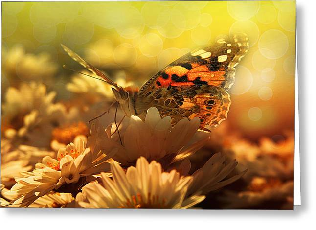 Butterfly  Greeting Card by Balazs Kovacs