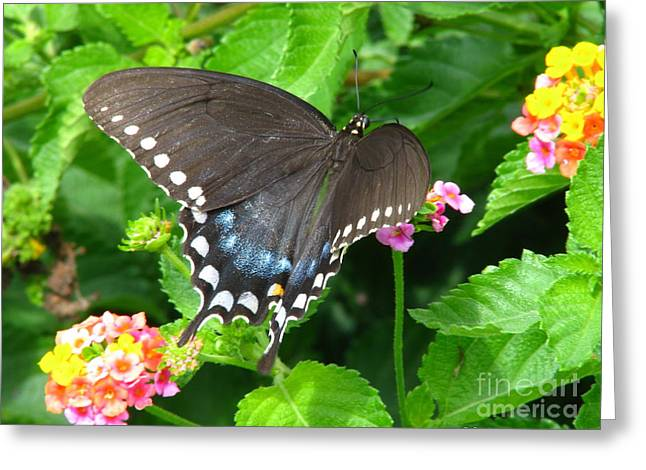 Butterfly Ballot Greeting Card by Greg Patzer