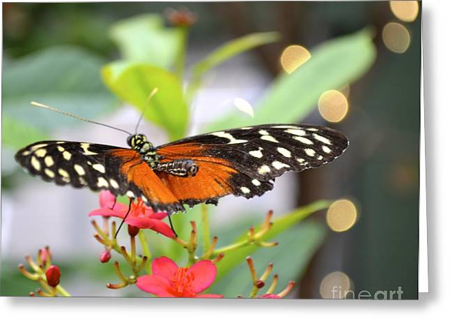 Butterfly Beauty Greeting Card by Carla Carson