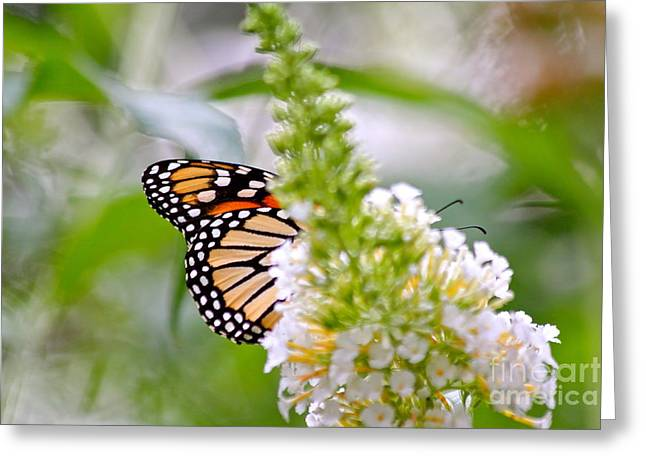 Butterfly Behind Bush Greeting Card by Jay Nodianos