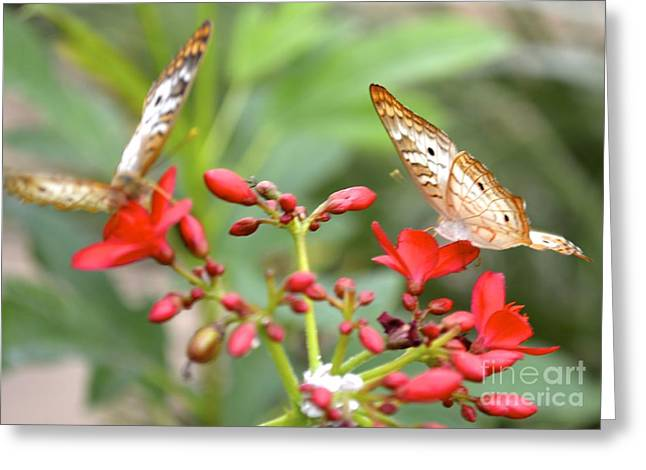 Greeting Card featuring the photograph Butterfly Besties by Carla Carson