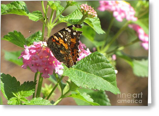 Butterfly Bloom Greeting Card by Gayle Melges
