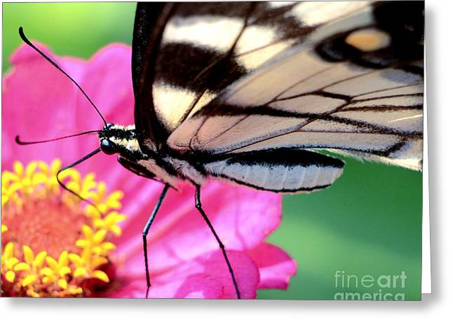 Butterfly Brunch Greeting Card by Chad and Stacey Hall