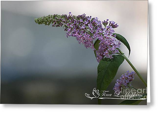 Greeting Card featuring the photograph Butterfly Bush 20120706_165a by Tina Hopkins