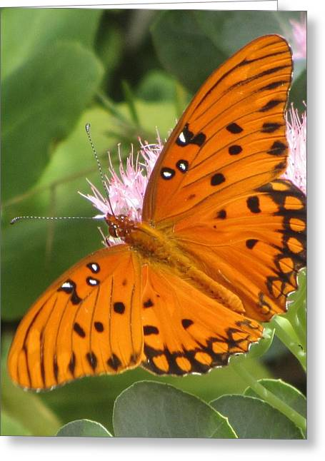 Butterfly Butterfly 2  Greeting Card