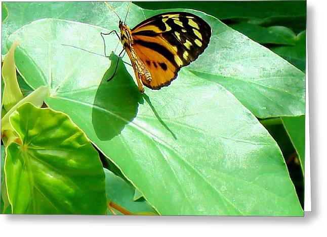 Greeting Card featuring the photograph Butterfly Chasing Shadow by Janette Boyd