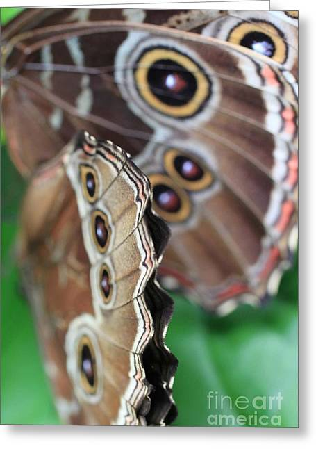Butterfly Close Up  Greeting Card by AR Annahita