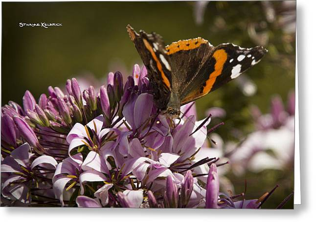 Greeting Card featuring the photograph Butterfly Close Up by Stwayne Keubrick