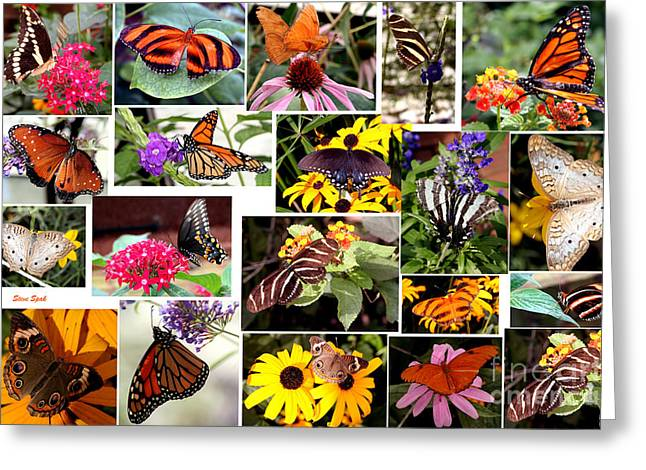Greeting Card featuring the photograph Butterfly Collage by Steven Spak
