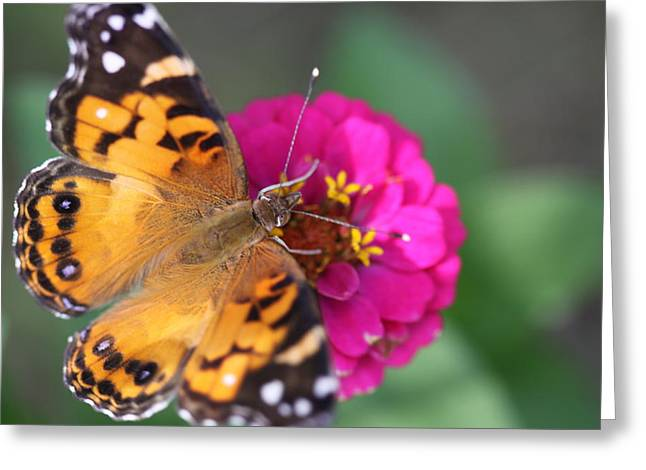 Butterfly Dance Greeting Card