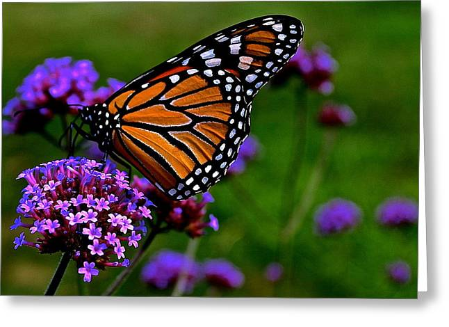 Butterfly Journey Greeting Card