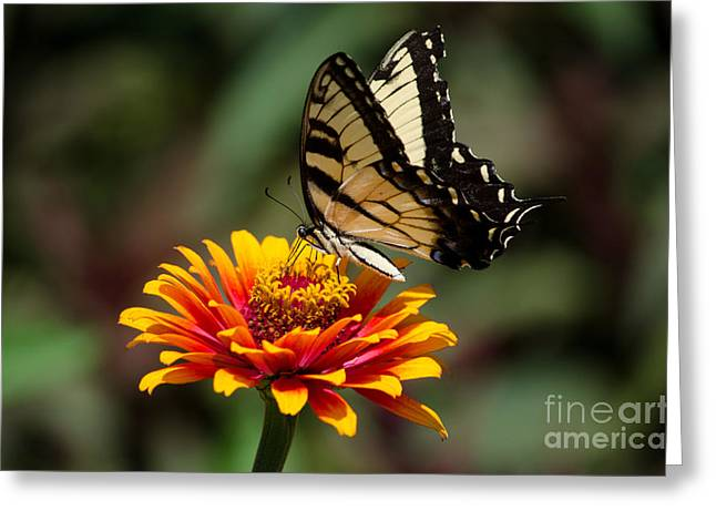 Butterfly Delight Greeting Card by Nancy Edwards