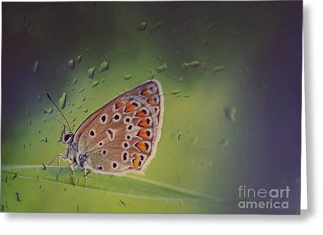 Butterfly Greeting Card by Diana Kraleva