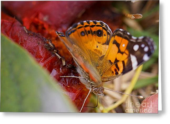 Greeting Card featuring the photograph Butterfly by Erika Weber