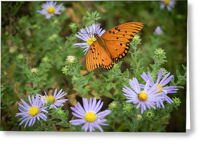 Butterfly Garden Greeting Card by James Barber