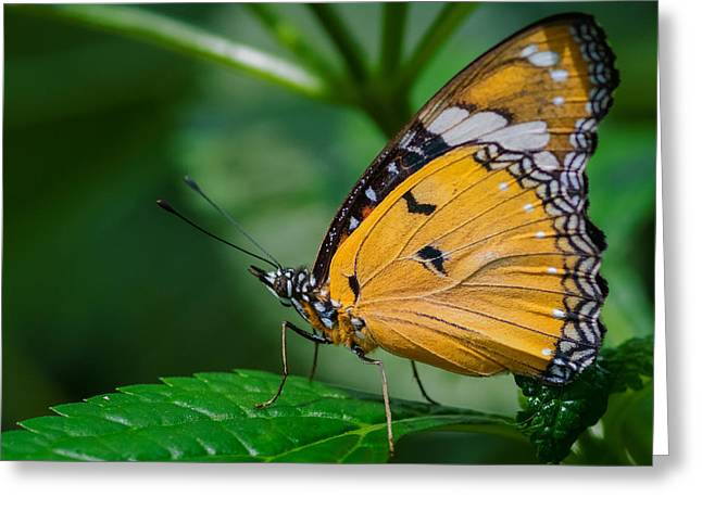 Greeting Card featuring the photograph Butterfly  by Garvin Hunter