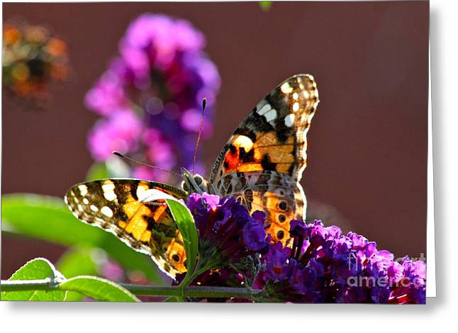 Butterfly Hiding Greeting Card by Jay Nodianos