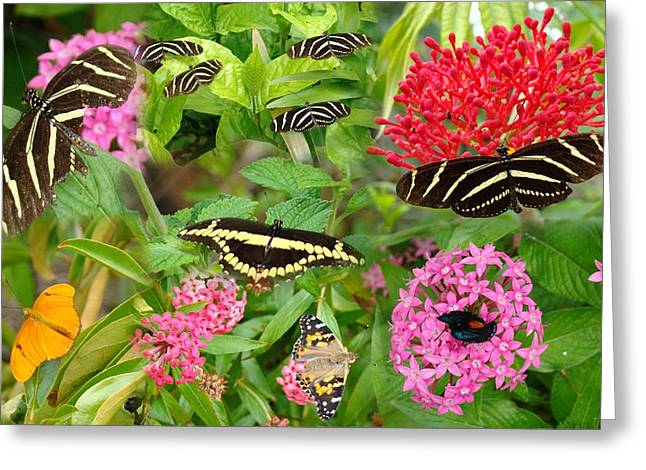 Butterfly High Greeting Card