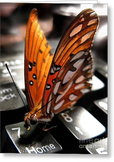 Greeting Card featuring the photograph Butterfly Home At 7 by Jennie Breeze
