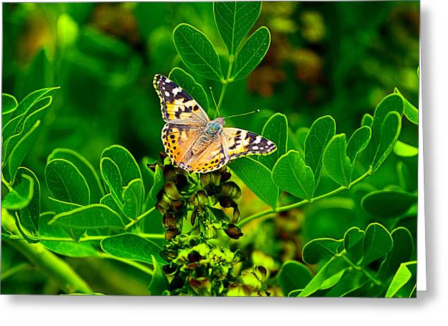 Butterfly In Paradise Greeting Card